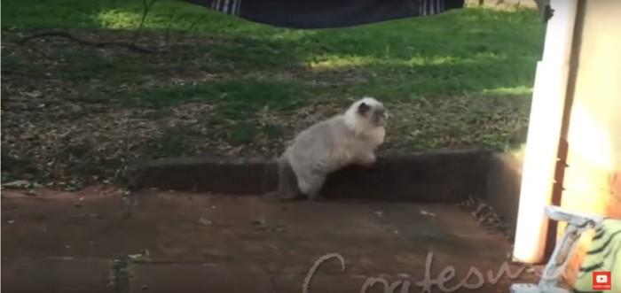猿を追い払う猫