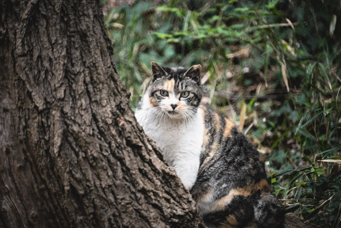 木の後ろに隠れている猫
