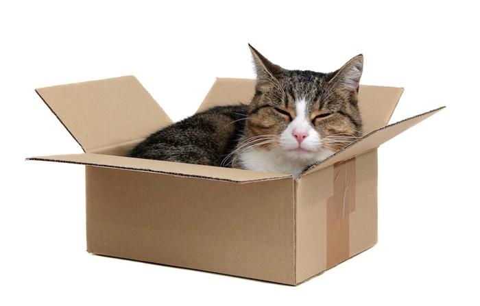 箱に入って満足げな猫
