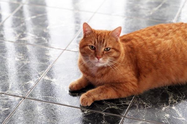 冷たそうな床の上の猫