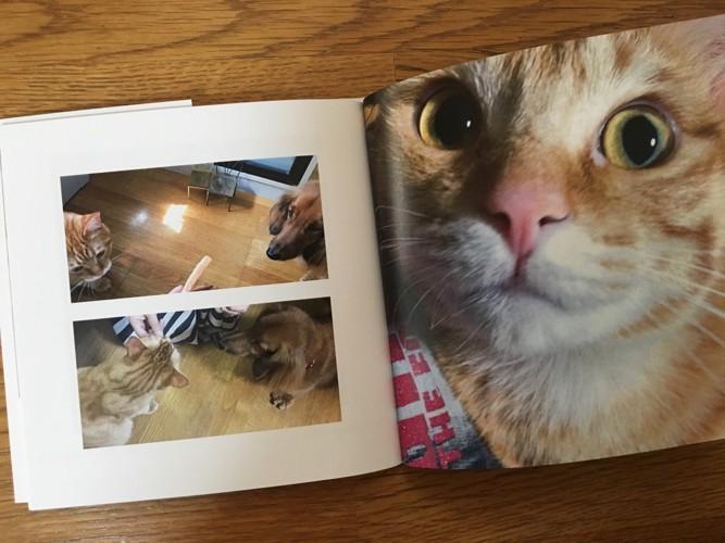 愛猫写真集