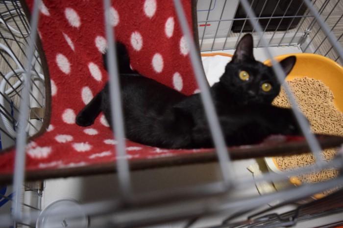 ハンモックで横になる黒猫