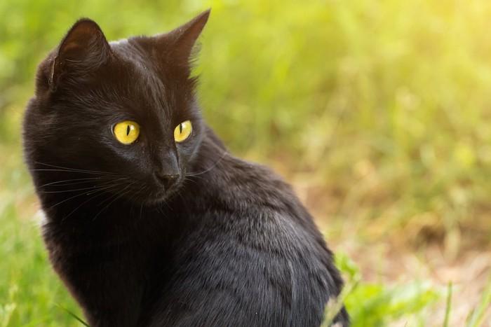 光に照らされる黒猫