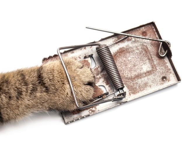 ネズミ捕りに挟まった猫の手