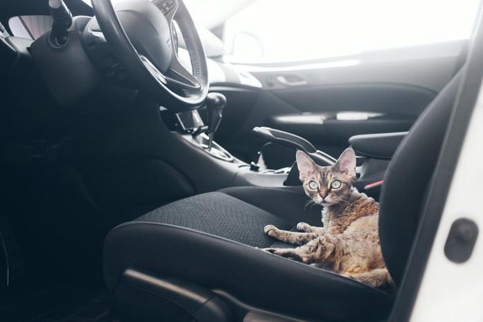 車のシートに乗る猫