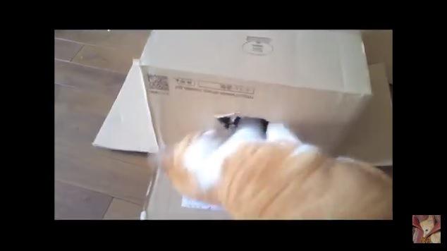 箱に手を入れる猫