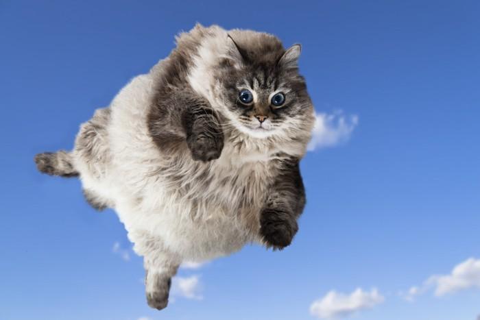 空中を飛ぶ大きな猫