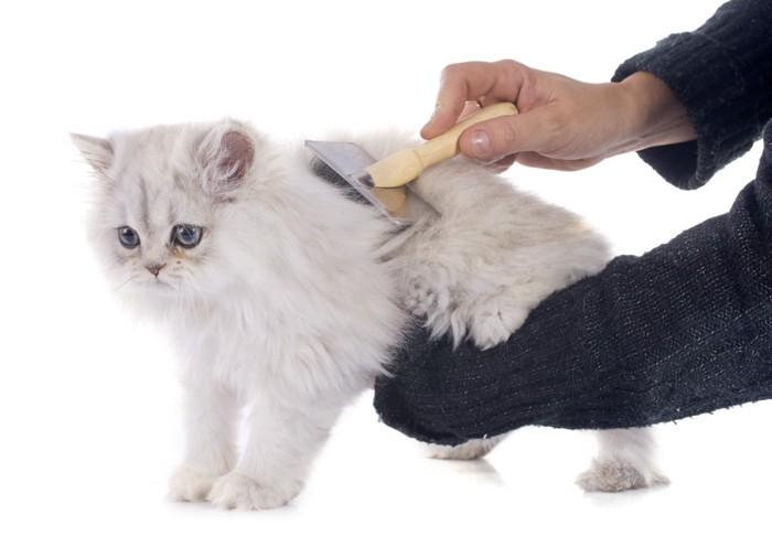 ブラッシング中の白い猫