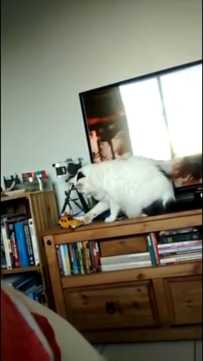 落としかける猫