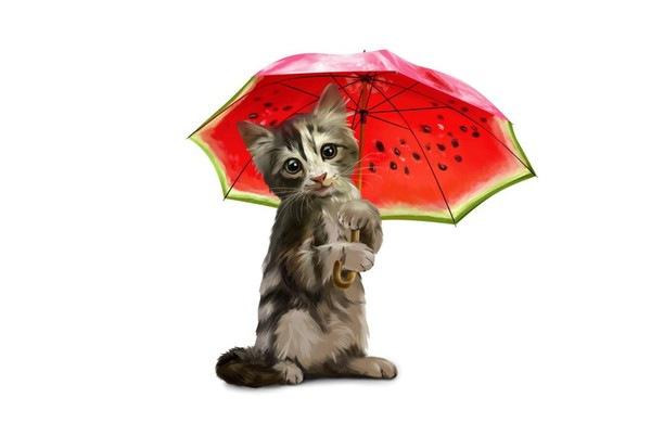 傘をさしている野良猫