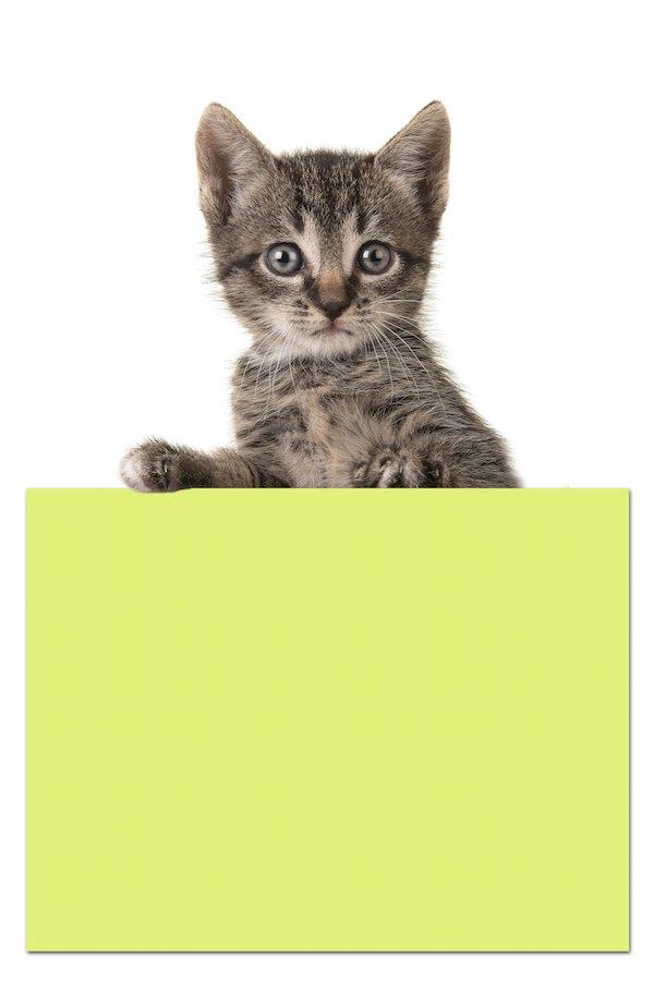 黄色い付箋と子猫