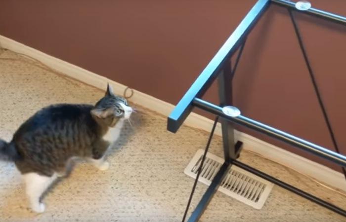 机を見つめる猫