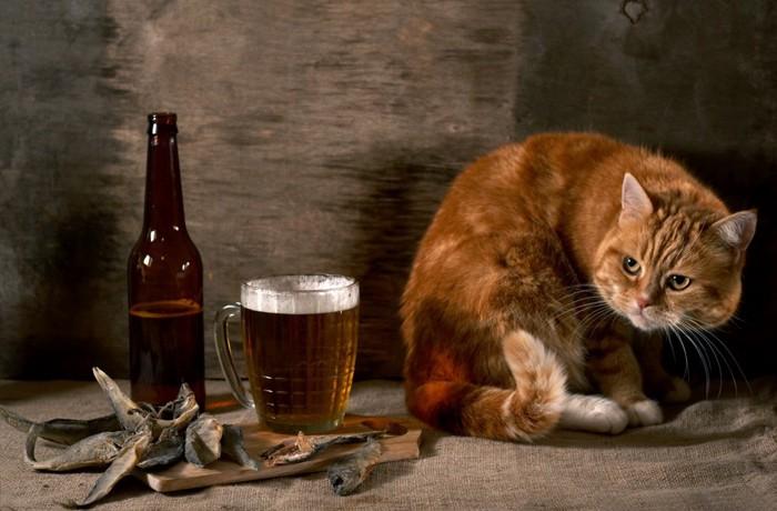 猫とビール