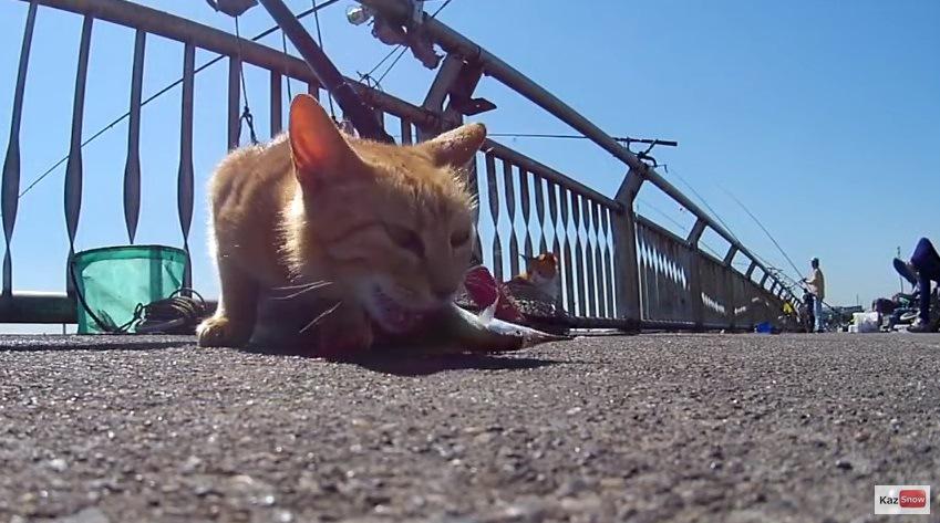 魚を食べる猫