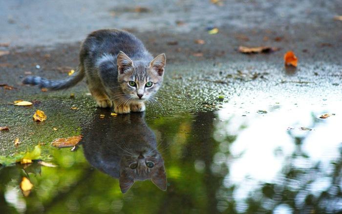 雨の中の子猫