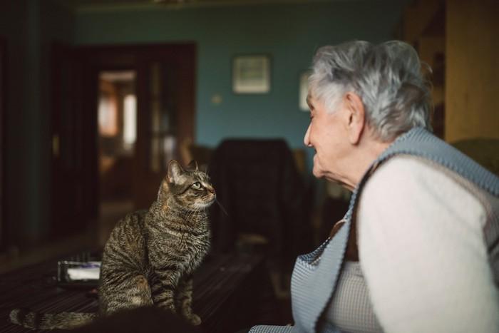 おばあちゃんと見つめ合う猫