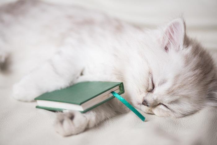 本を乗せて寝る白猫