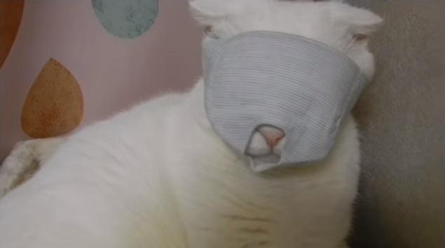 マスクを付けた猫の顔アップ