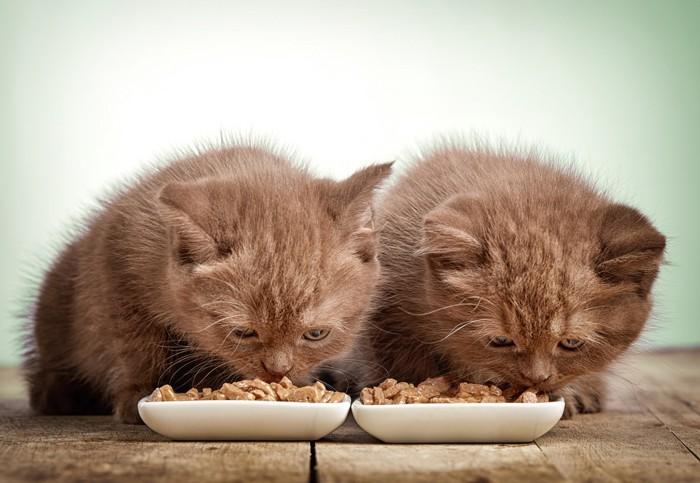 ご飯を並んで食べる2匹の子猫