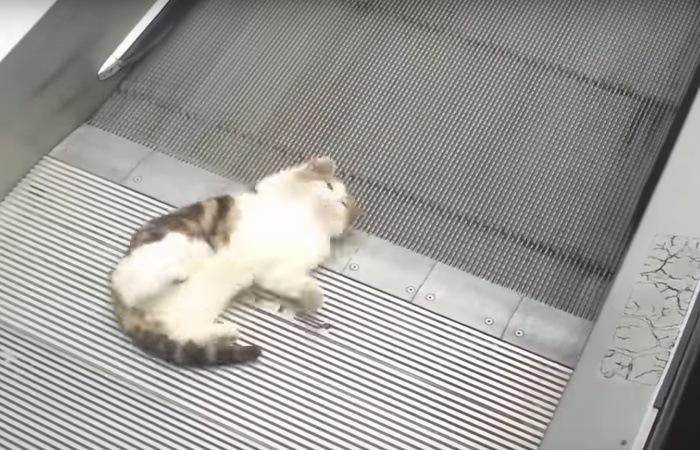 オートスロープの近くで寝転ぶ猫