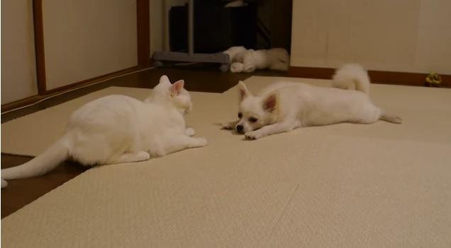 向かい合って寝そべる猫と犬