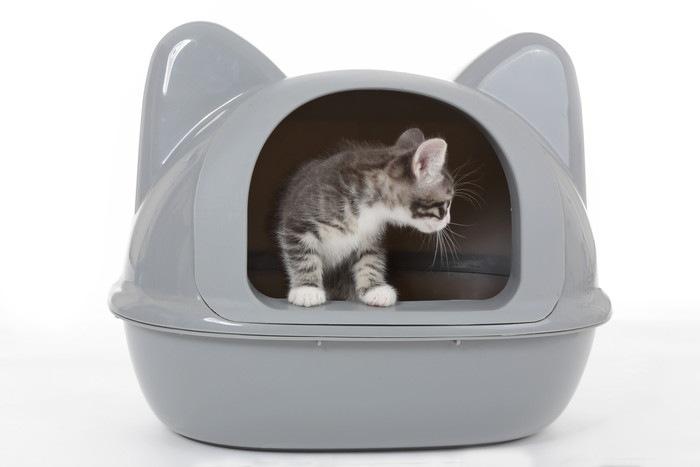 トイレの中の子猫