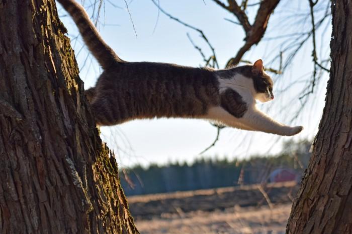 木を渡る猫