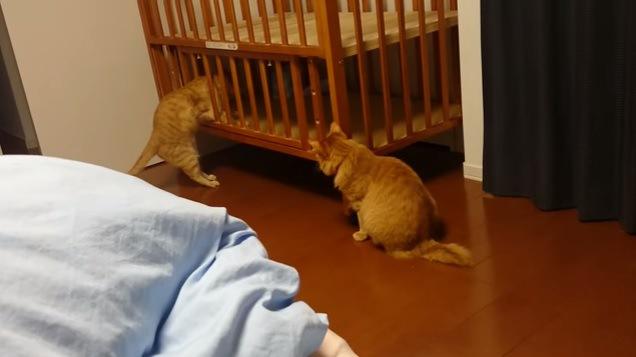 体を抜こうとする猫