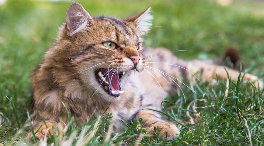 凛々しく威嚇する猫
