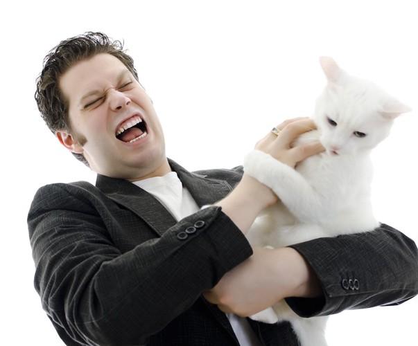 怒っている白猫と男性