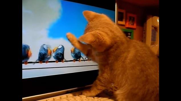 画面に向かって手を伸ばす猫