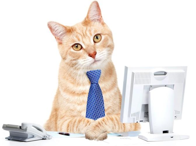 デスクに座るネクタイをした茶トラ猫