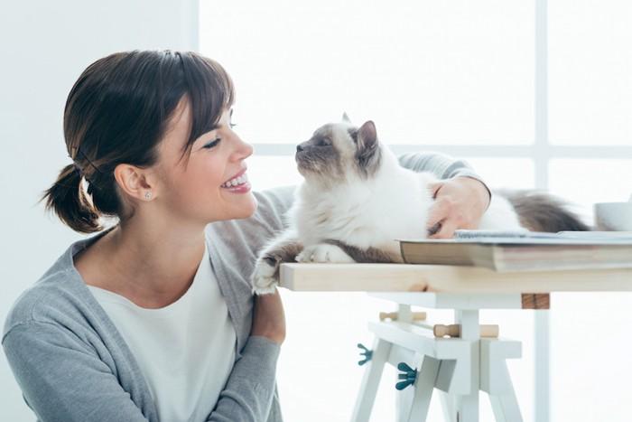 机の上の猫と見つめ合う女性