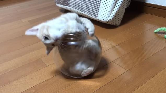 体を反らせる猫