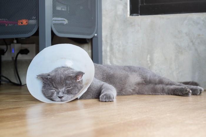 カラーをしながら眠る猫