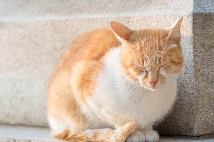 日光浴して寝てる猫