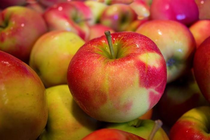 猫にりんごは食べさせても大丈夫
