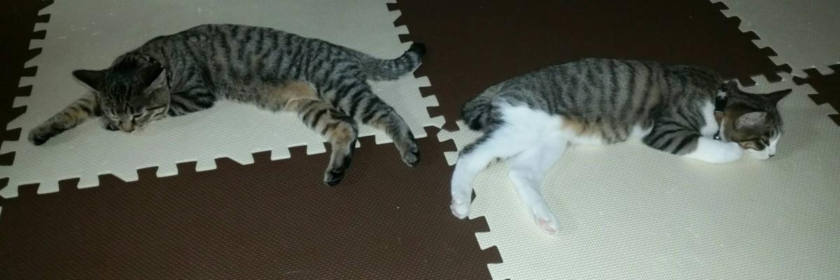 伸びて寝る2匹の猫