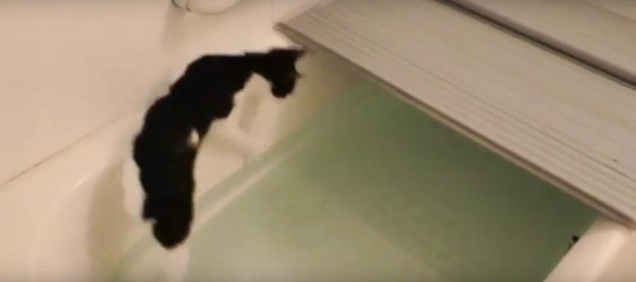 滑る猫ちゃん