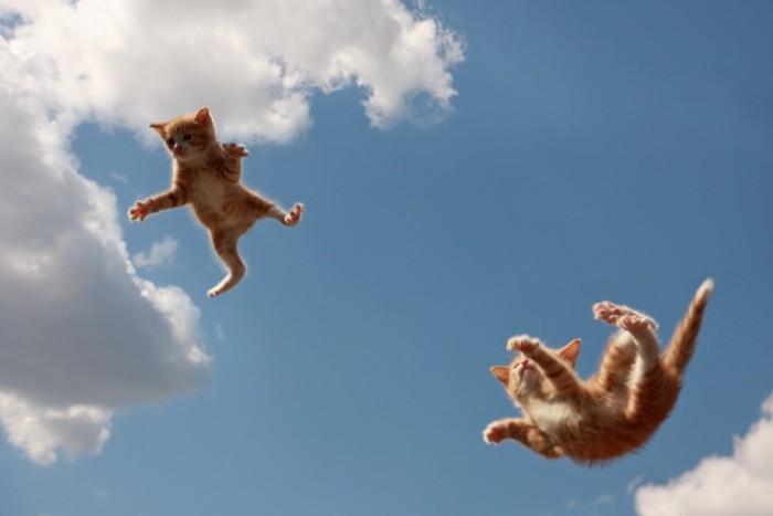 飛ぶ子猫達