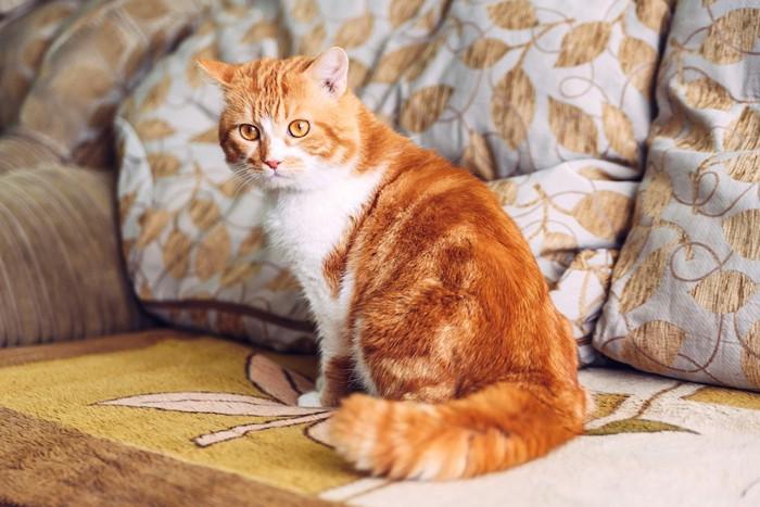 ソファの上に座っている猫