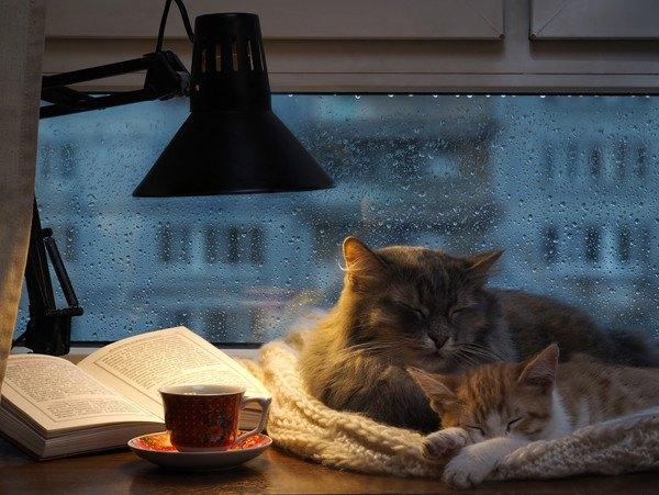 夜にくつろぐ二匹の猫
