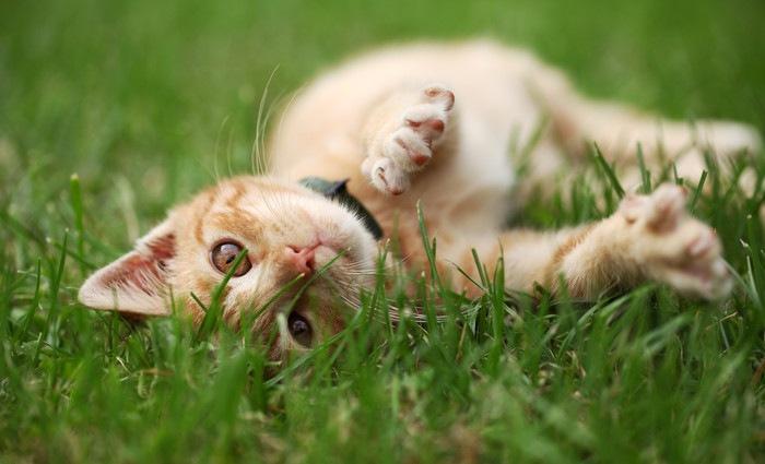 芝生の上で横たわっている猫