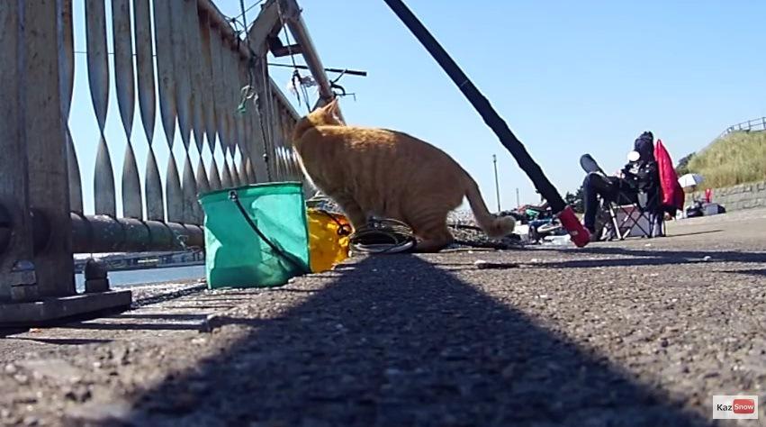 釣り人を振り返る猫