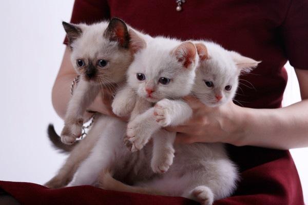 抱えられる3匹の猫