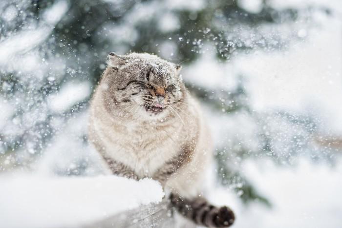 猫が寒がりな理由と震えている時...