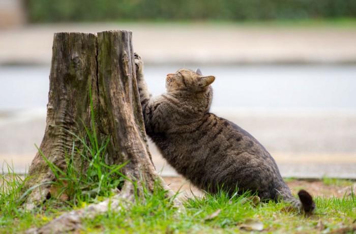 木で爪とぎする猫