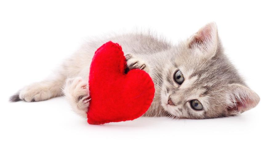 ハートを抱きしめる子猫
