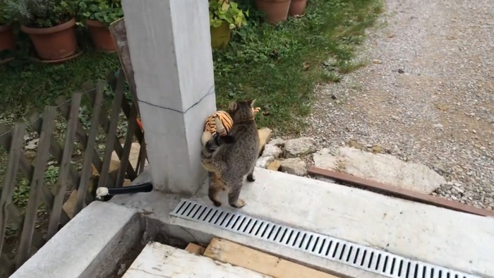 角にぬいぐるみをぶつける猫