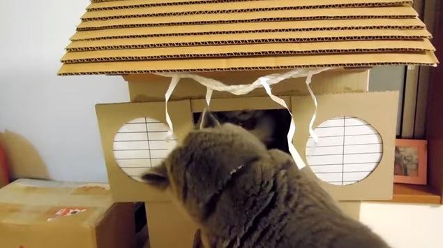 手を突っ込む灰色の猫